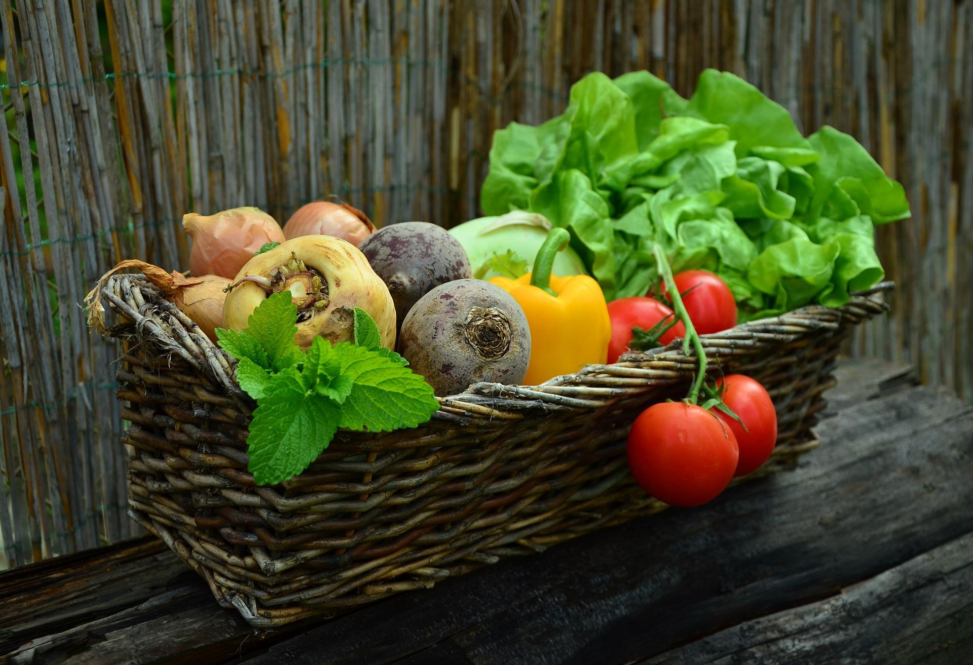 Fit bleiben – Proteine oder Kohlenhydrate? Kraft oder Ausdauertraining?